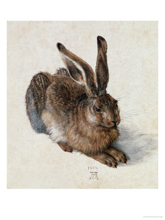 art prints, posters, �Young Hare� by Albrecht Durer, a rabbit
