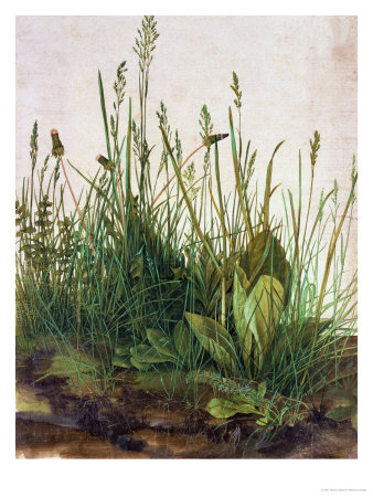 art prints, posters, �Tall Grass� by Albrecht Durer, a lanscpae of grasses