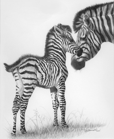 Giclee Prints, art prints of mother and baby zebras, �Stars in Stripes� by Brian Beausoleil