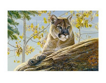 Front Range Cougar by artist Kalon Baughan. Art prints, animal art; wildlife art; from an original oil painting
