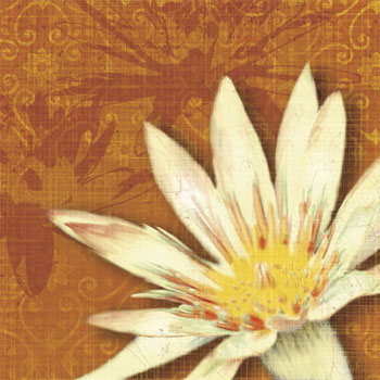 art prints, posters, �Efflorescence II� by Tandi Venter, a water lily